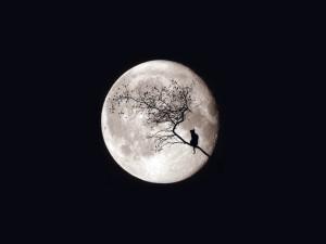 Moon 108092