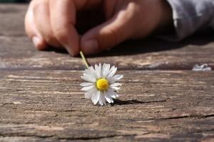 emlékeztető virág